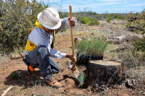Как убрать пень от дерева. Как удалить пень — обзор лучших способов по избавлению от пня (80 фото-идей)