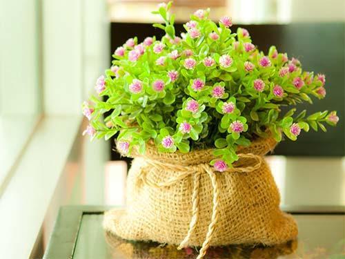Гороскоп комнатных растений. Домашние цветы по знаку Зодиака