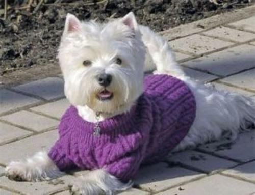 Как связать спицами одежду собаке. Как связать собаке свитер спицами (для начинающих)