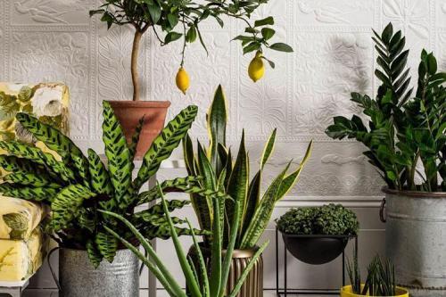 Комнатные цветы для жаркой квартиры. Комнатные цветы: фото и названия (каталог)