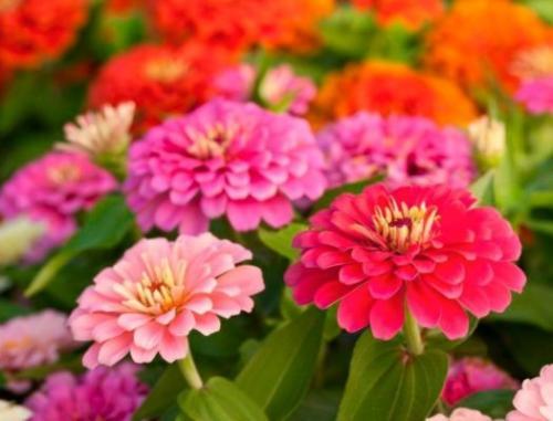 Цветы-талисманы знаков Зодиака. Цветы-талисманы для каждого знака Зодиака