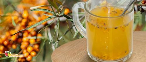 Чай из облепихи. Облепиховый чай: лучшие рецепты из замороженных и свежих ягод, польза и противопоказания
