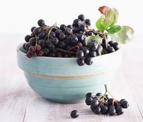 Что сделать из рябины черноплодной. Свойства черноплодной рябины: полезные заготовки