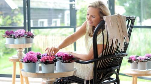 Комнатные цветы. Самые популярные комнатные цветы