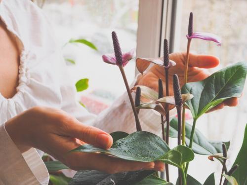 Комнатные цветы для семейного счастья и благополучия. Растения для любви и счастья в семье